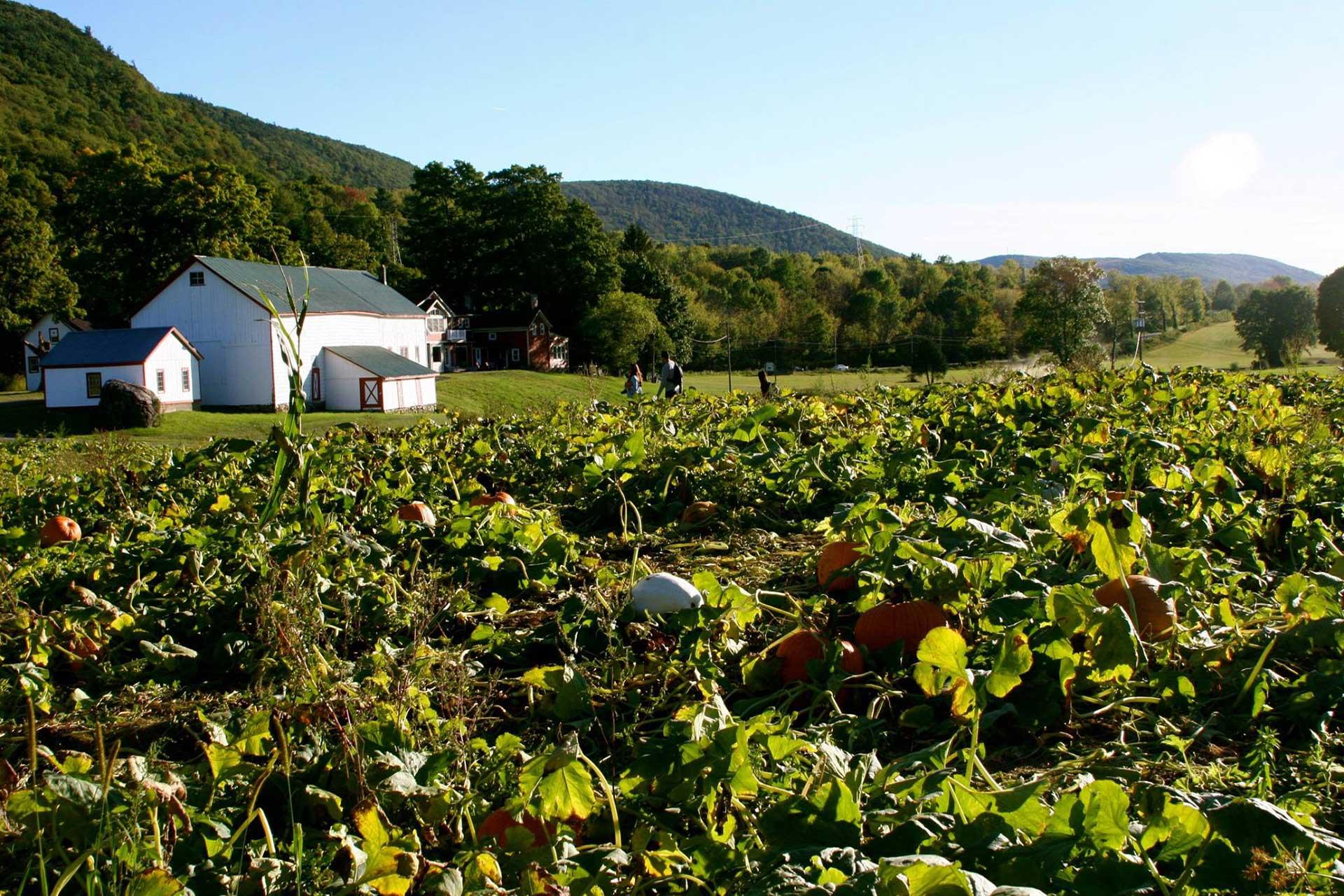 Heaven Hill Farm & Garden Center