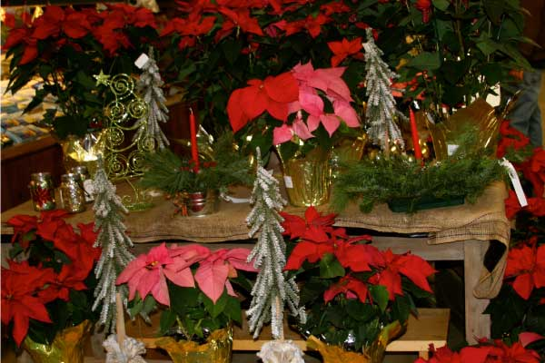 Christmas Heaven Hill Farm Garden Center
