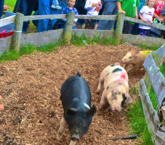 Home | Heaven Hill Farm & Garden Center